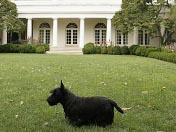 2008十大动物新闻<br>布什总统宠物狗咬人