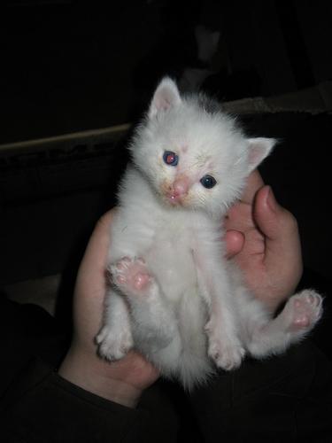 憨态可掬的可爱小猫咪(组图)