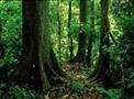 稳步推进<br>集体林权制度改革