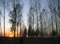 吉林市集体林改已启动