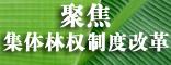 <center>聚焦集体林权制度改革</center>